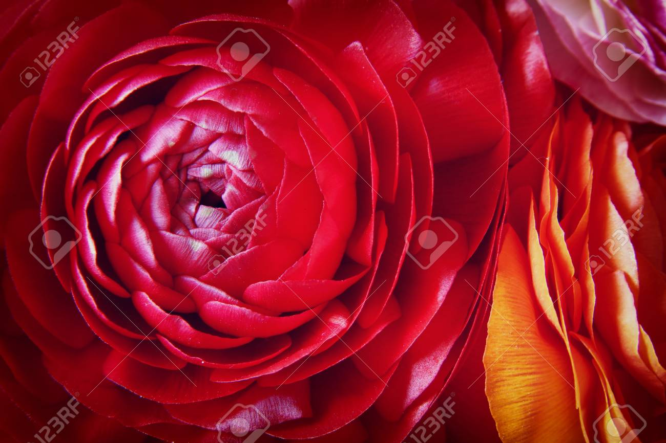 Close up of of red spring flowers top view photo stock photo close up of of red spring flowers top view photo stock photo 55591965 mightylinksfo