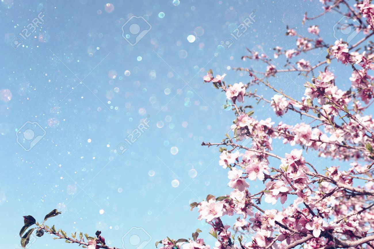 background of spring cherry blossoms tree. selective focus - 116575574