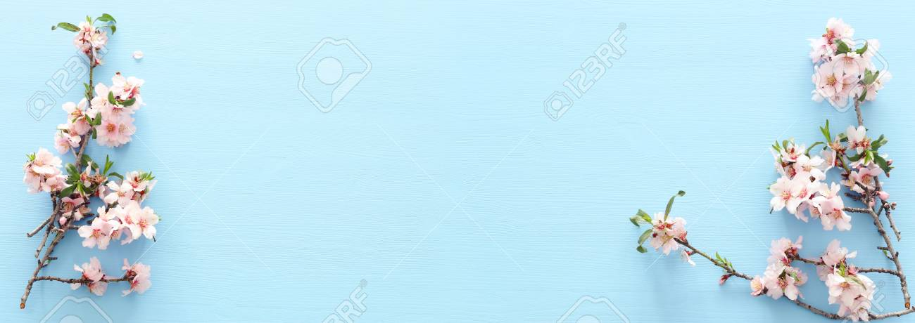 photo of spring white cherry blossom tree on pastel blue wooden background. View from above, flat lay - 118087808