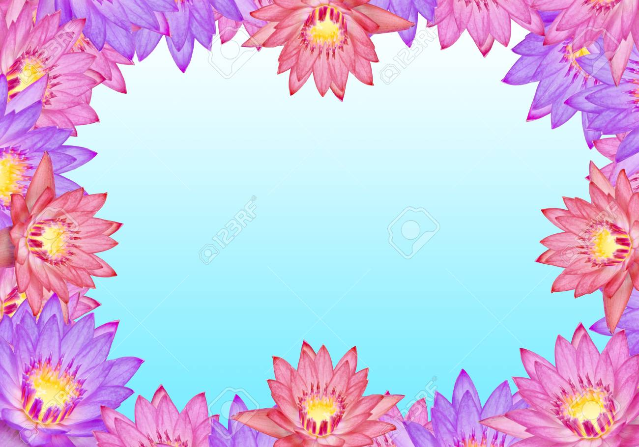 Colorful lotus flowers with text area stock photo picture and colorful lotus flowers with text area stock photo 19662854 mightylinksfo