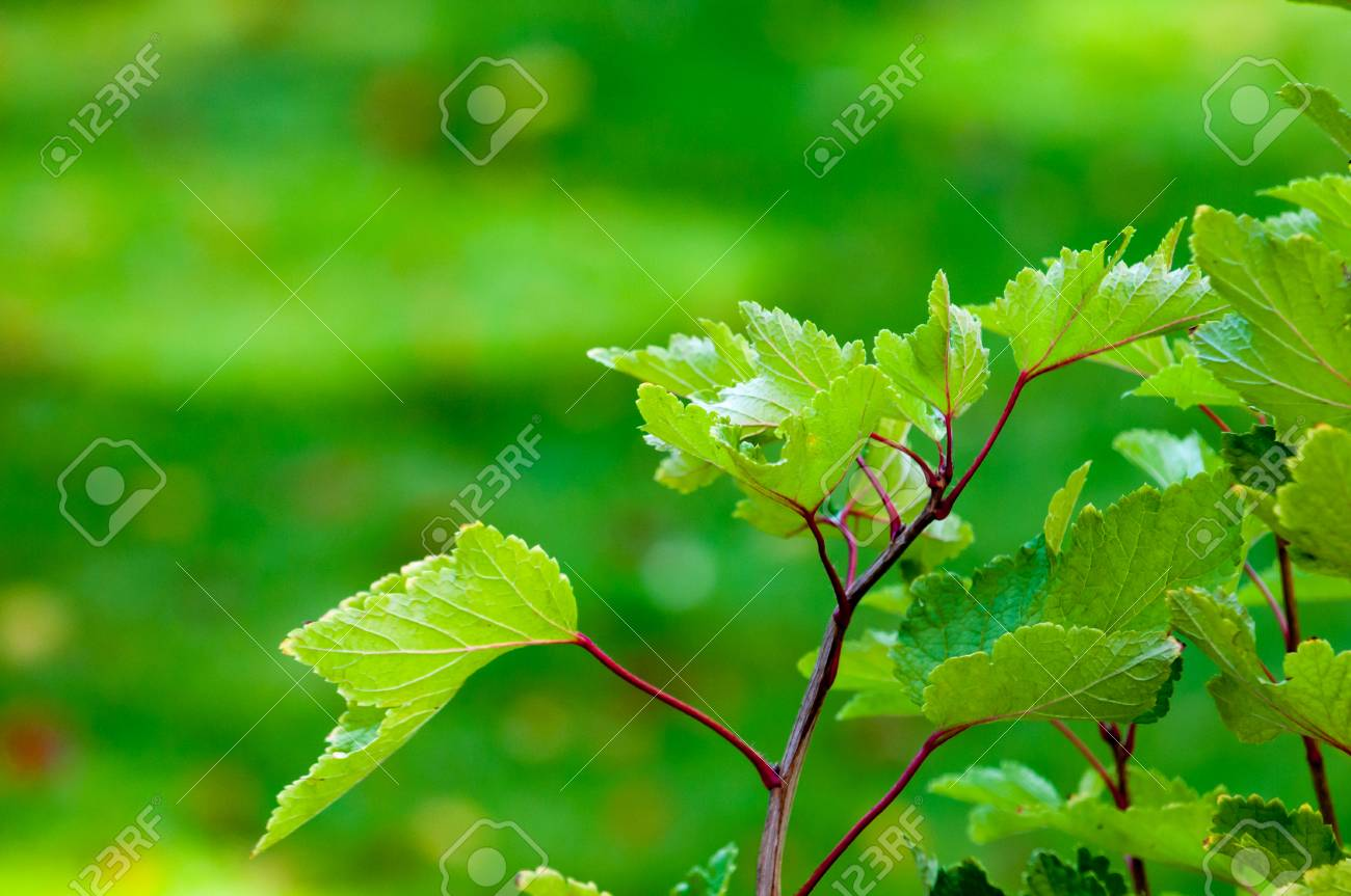 Green Plants On A Blurred Green Garden Background Stock Photo