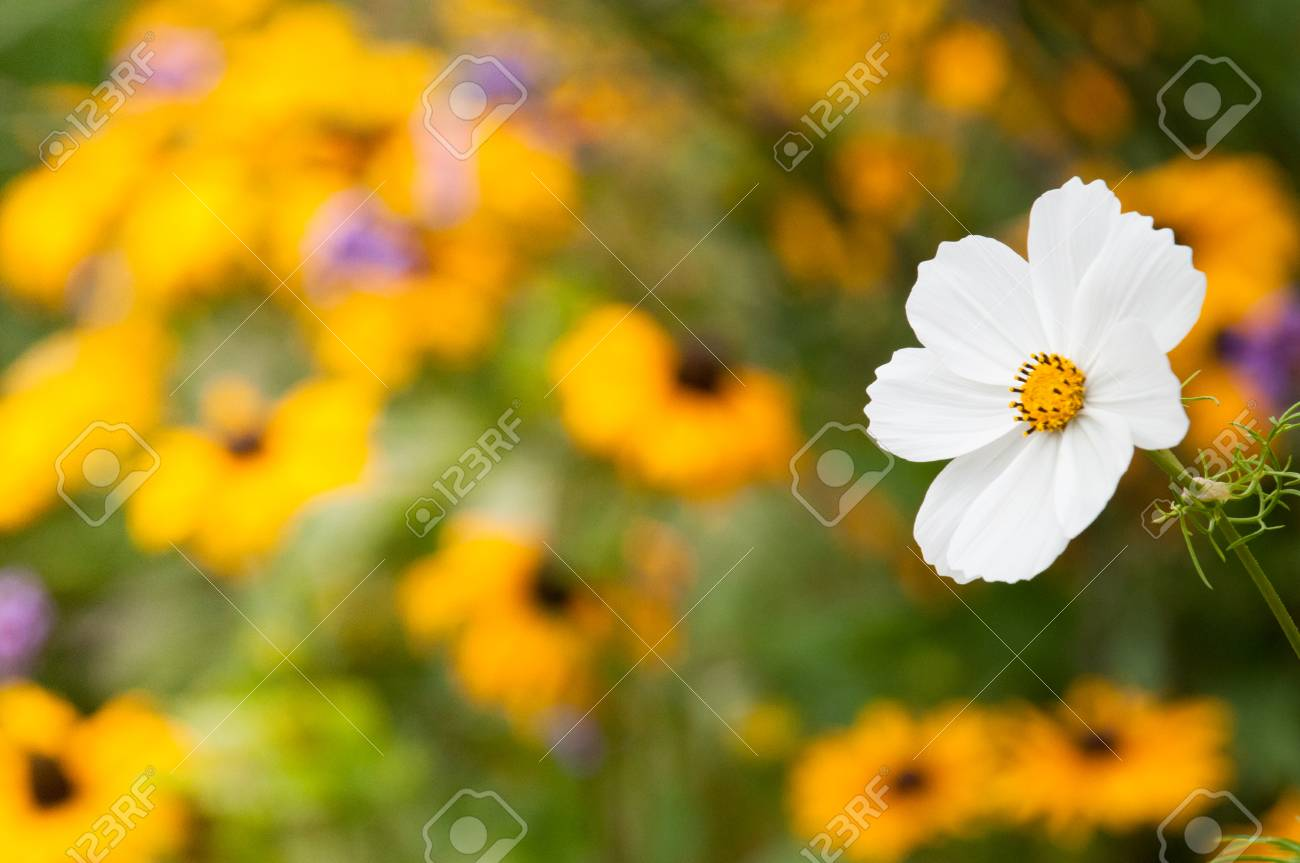 Wild Flowers Growing In An English Countryside Landscape Stock Photo