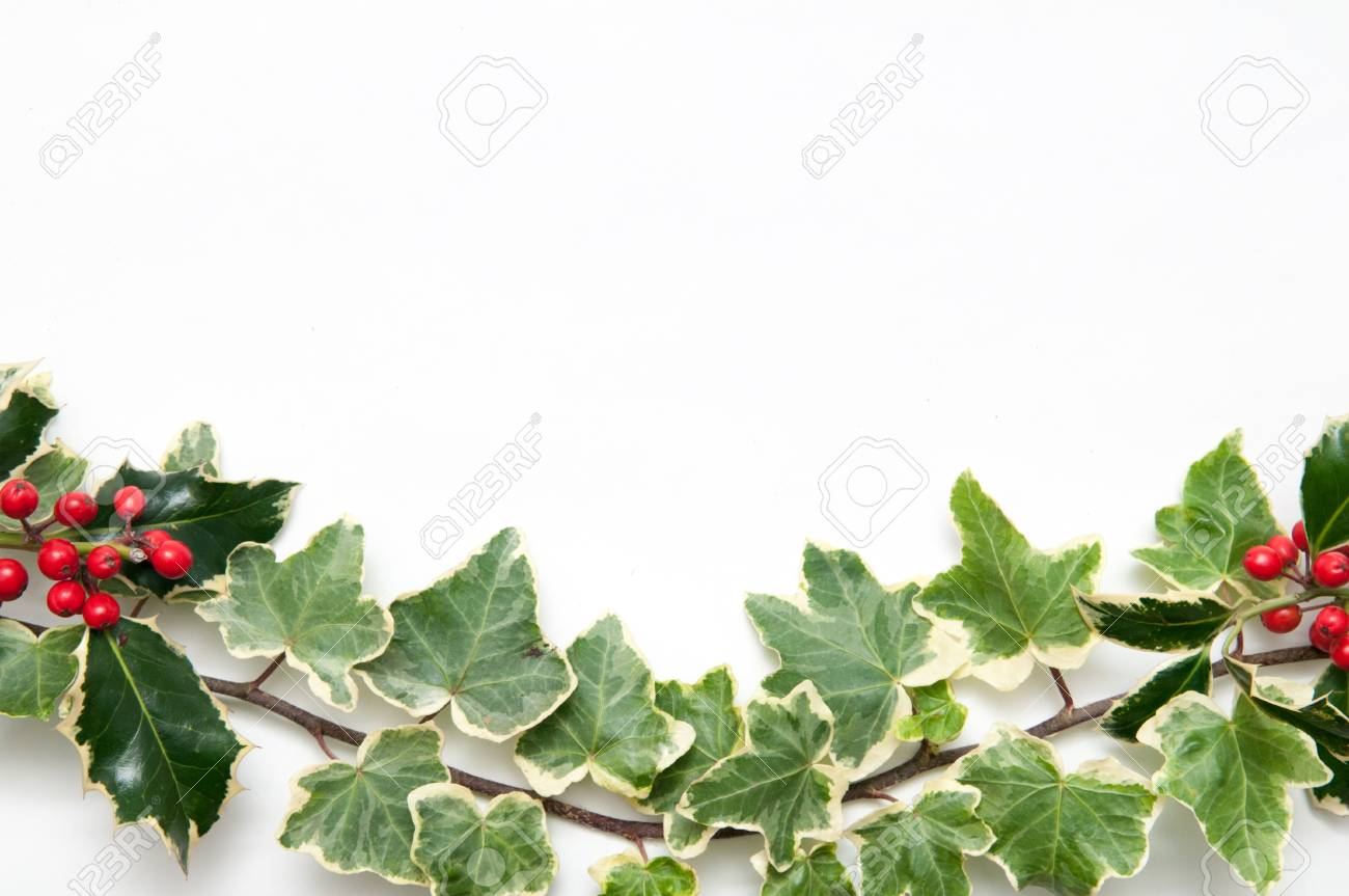 Festive Sprig Of Holly And Ivy Leaves With Berries Isolated On A White Background For