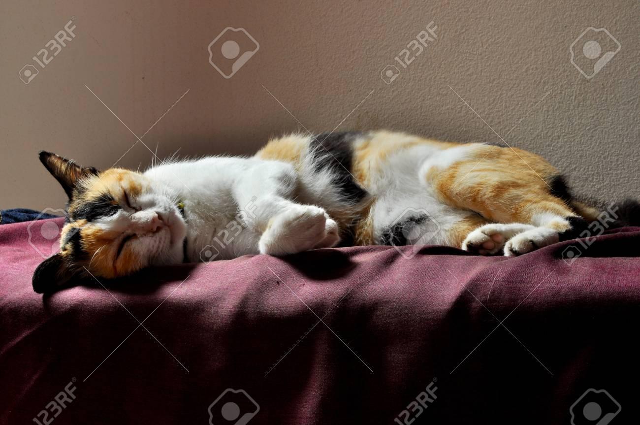 cat sleep in soft light Stock Photo - 7711834