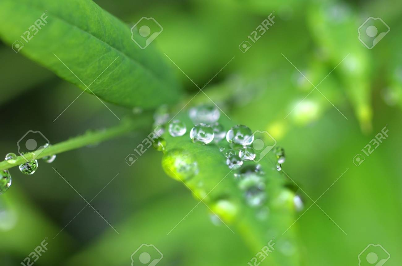 drops of water reflecting the scene on the leaves Stock Photo - 14555815