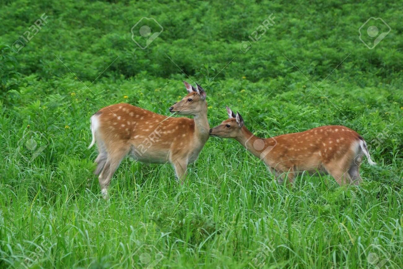 deer Stock Photo - 16930561