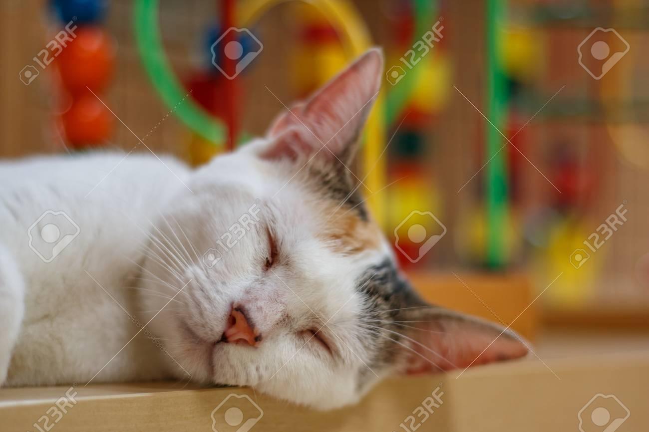 Cat portrait - 57563156