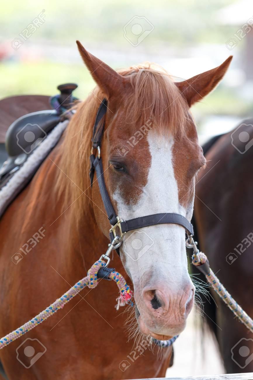 Horse portrait - 57563141