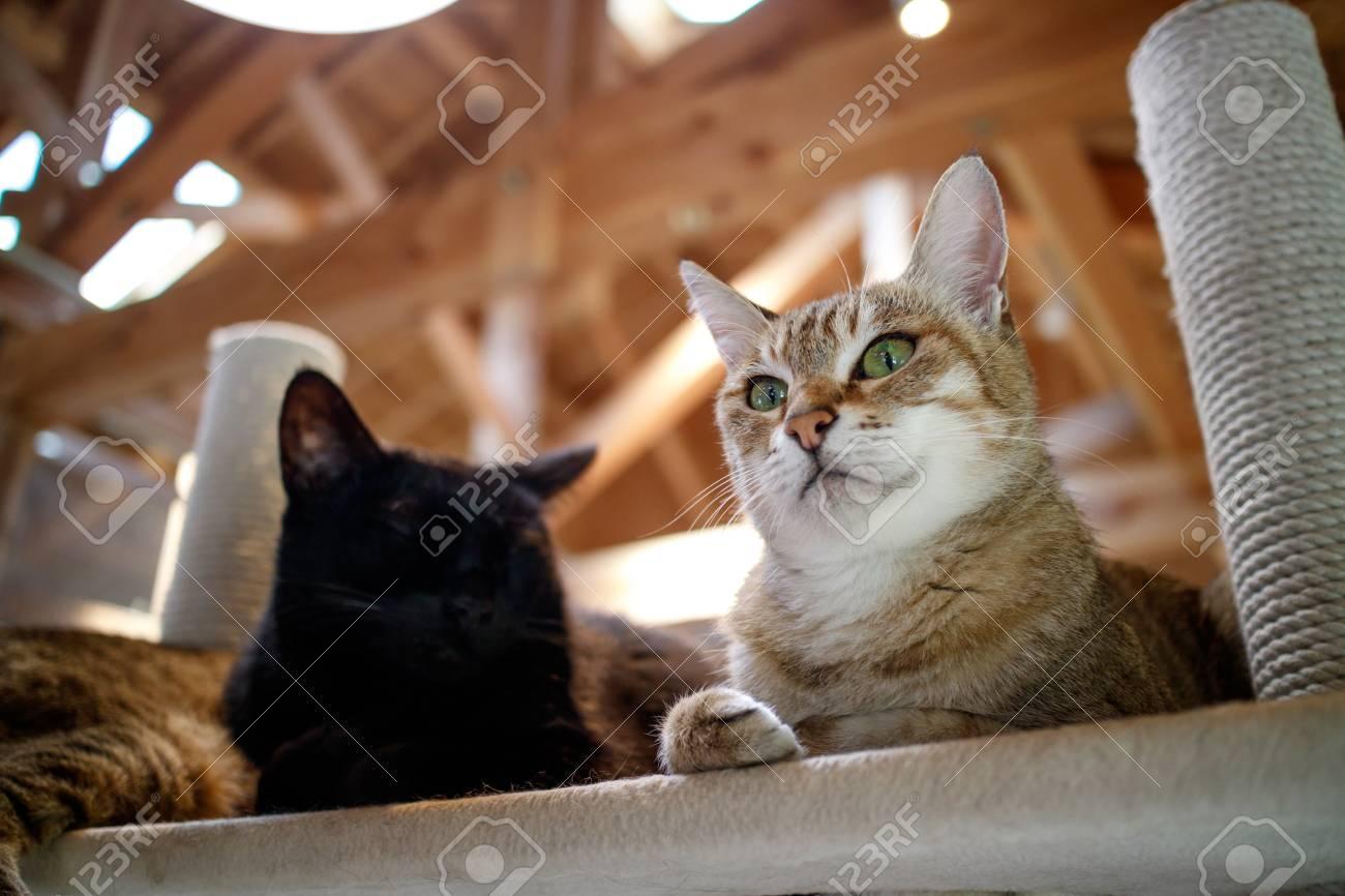 Cat portrait - 57563214