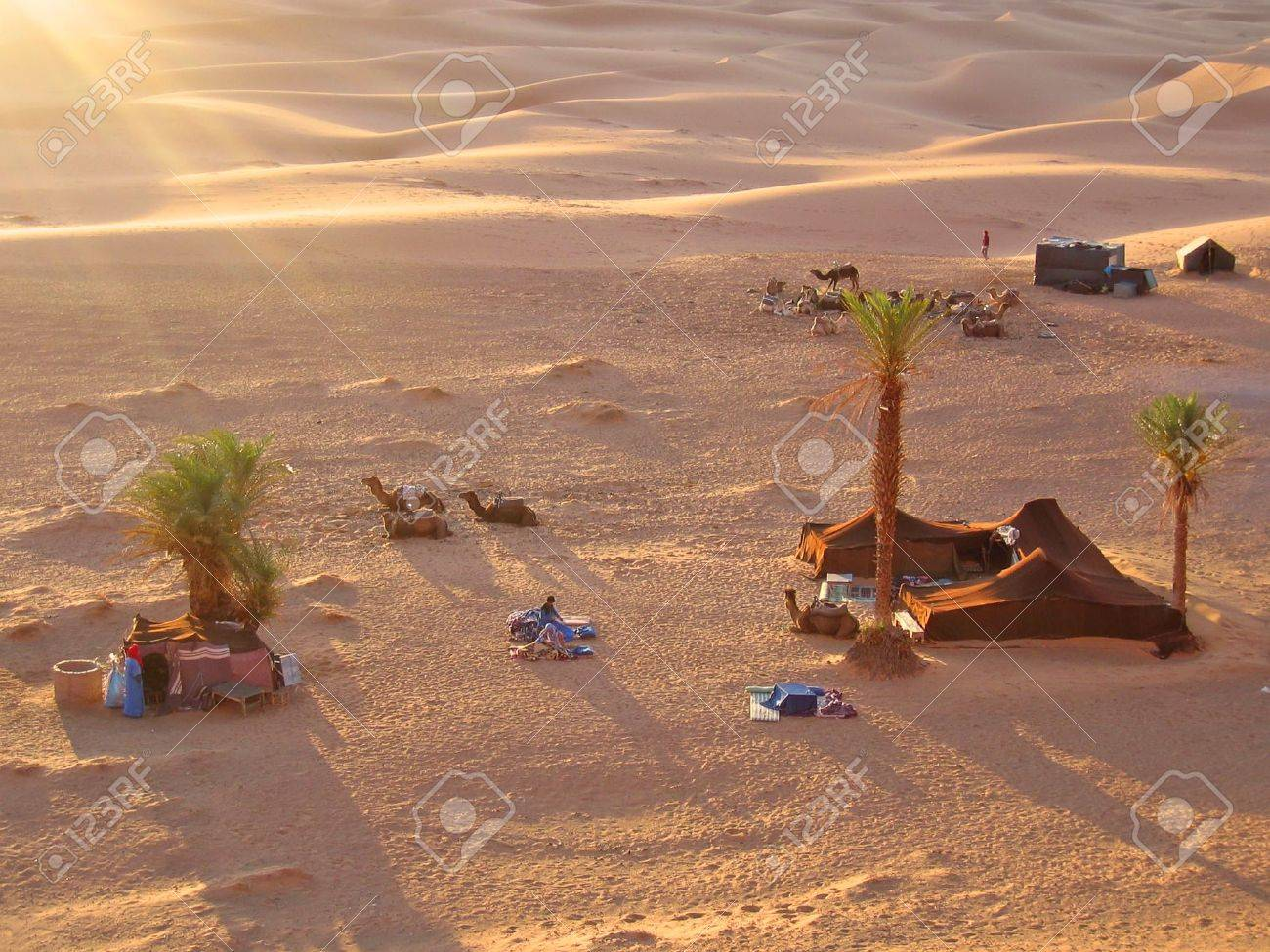 Sunset on the tent camp with camels - Erg Chebbi - Merzouga - Morocco. Stock Photo - 921390