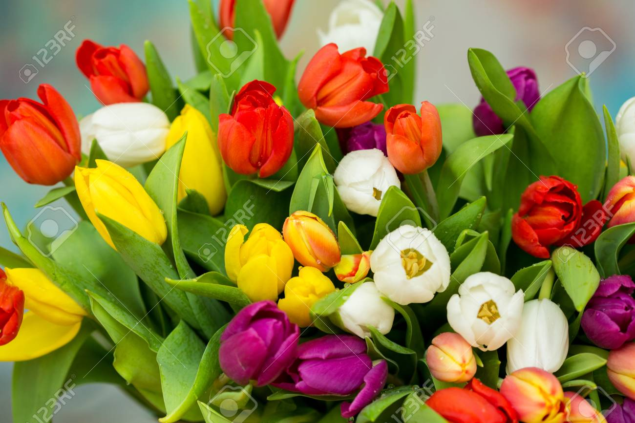 Tulips With Water Drops Spring Flowers Bouquet Red Pink Yellow