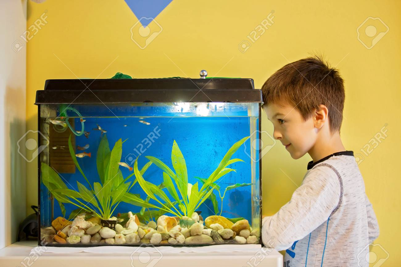 Image result for children fish tank