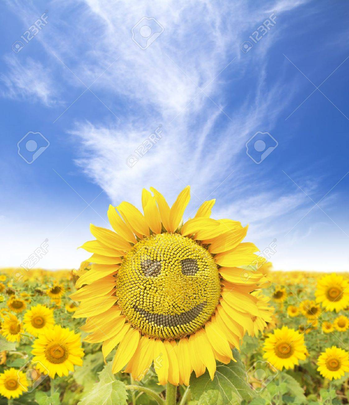 Smiling Sunflower Images Sunflower Face Smiling Face