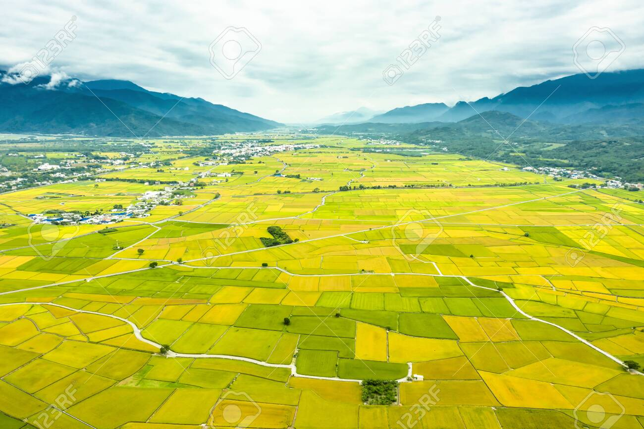 Aerial view of Beautiful Rice Fields in taitung . Taiwan. - 132739048