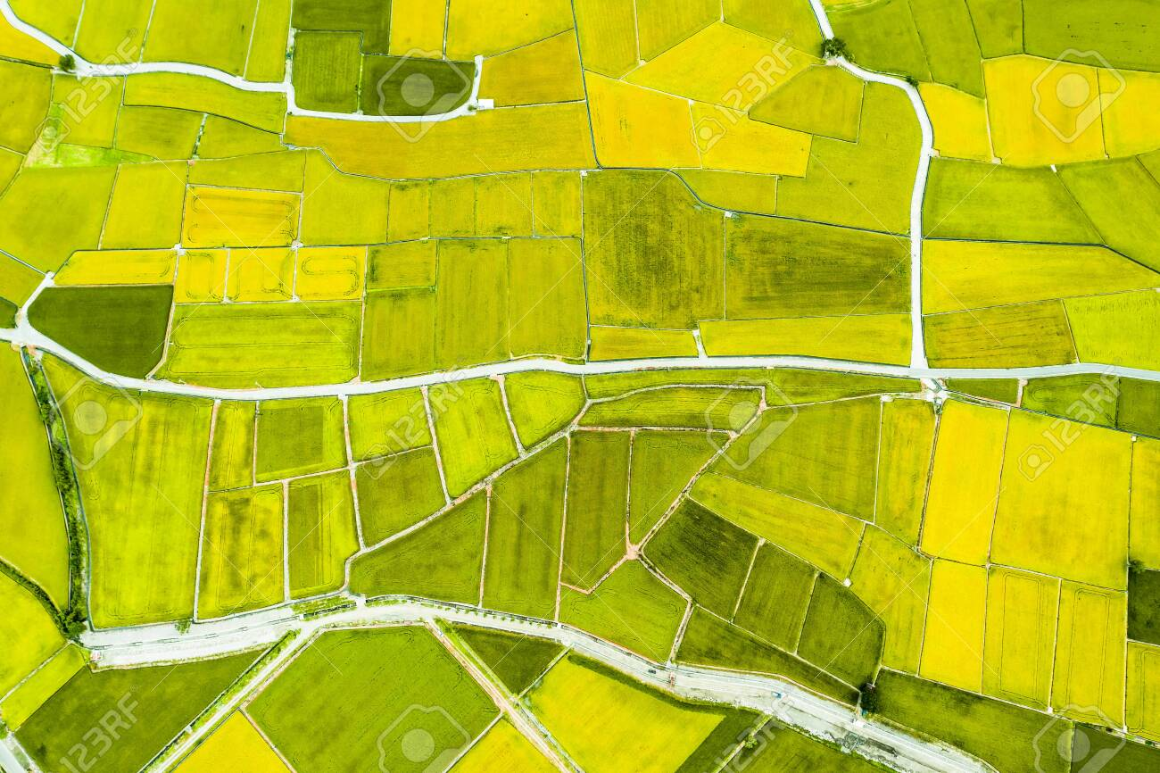 Aerial view of Beautiful Rice Fields in taitung . Taiwan. - 132739956