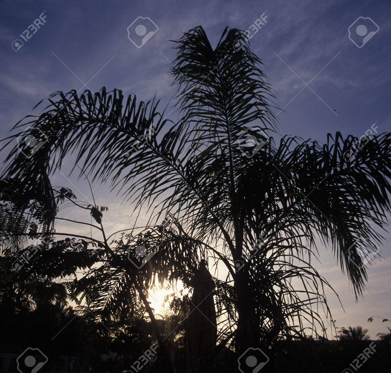 The Long Fronds Of A Tropical Palm Tree Silhouetted Against A
