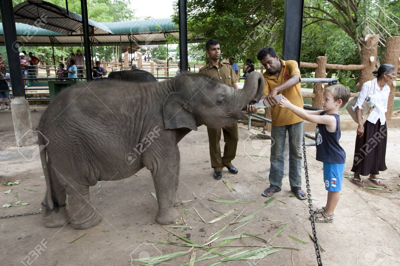 A boy helps to feed one of the elephant calves at Pinnewala Elephant Orphanage in Sri Lanka. - 51901002