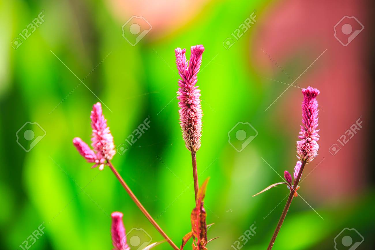 Les Plus Belles Graminées graminées indigènes de belles fleurs au lever du soleil