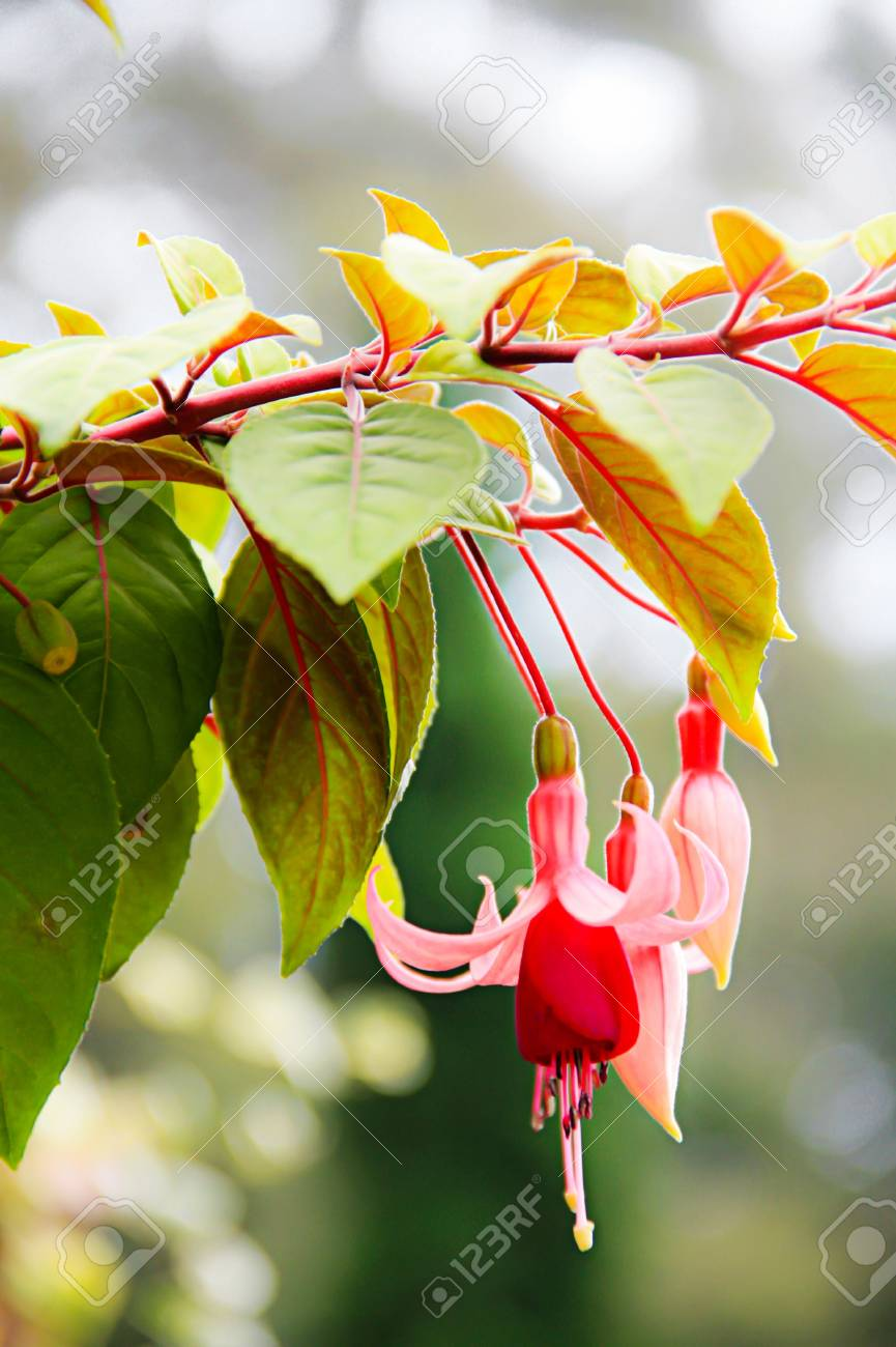 Beautiful Flowers Stock Photo Picture And Royalty Free Image Image