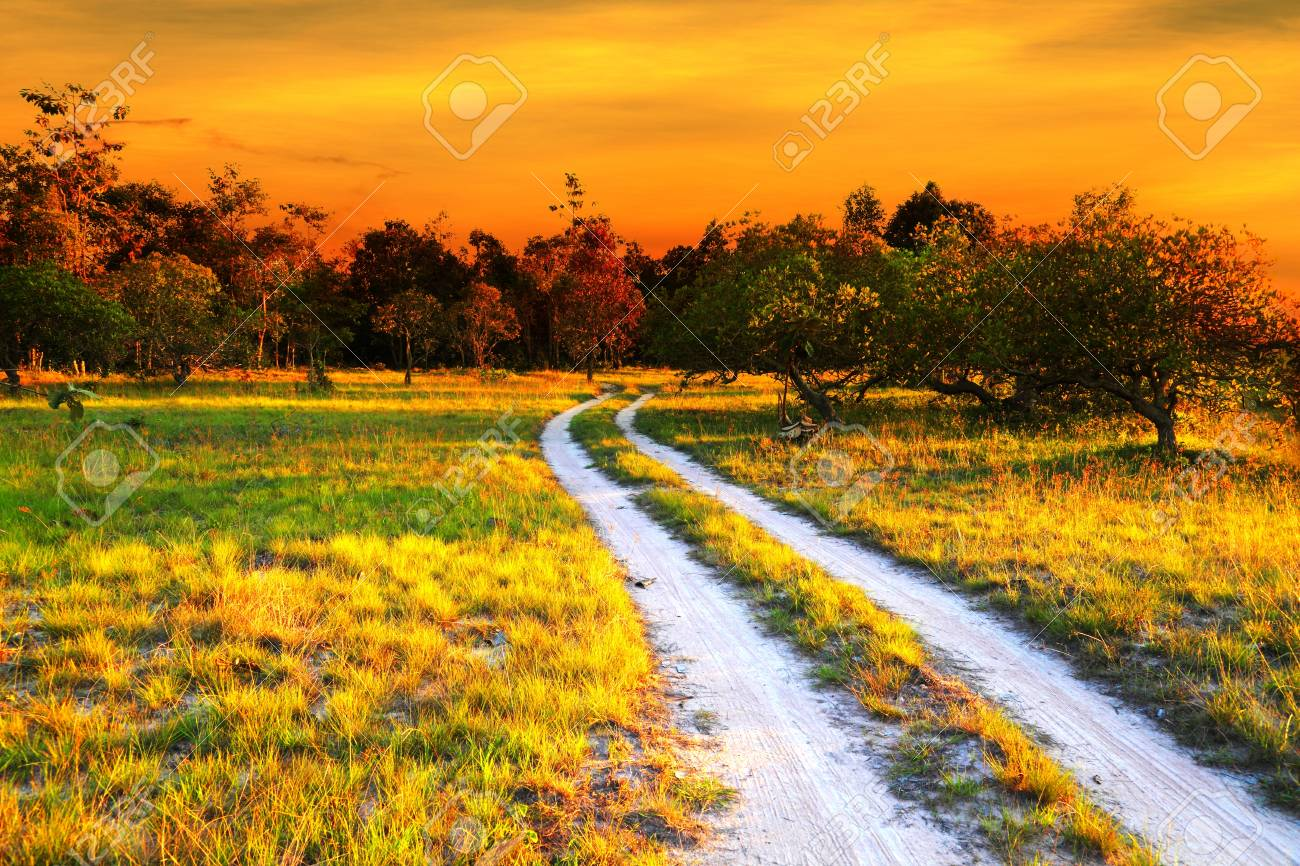 Road in meadow Stock Photo - 14746822