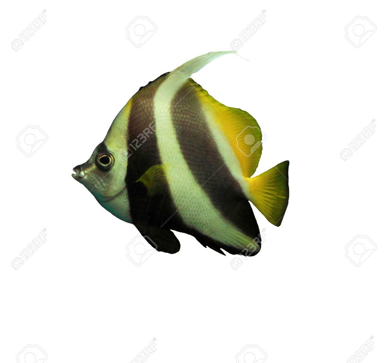 Tropical fish Stock Photo - 16602027