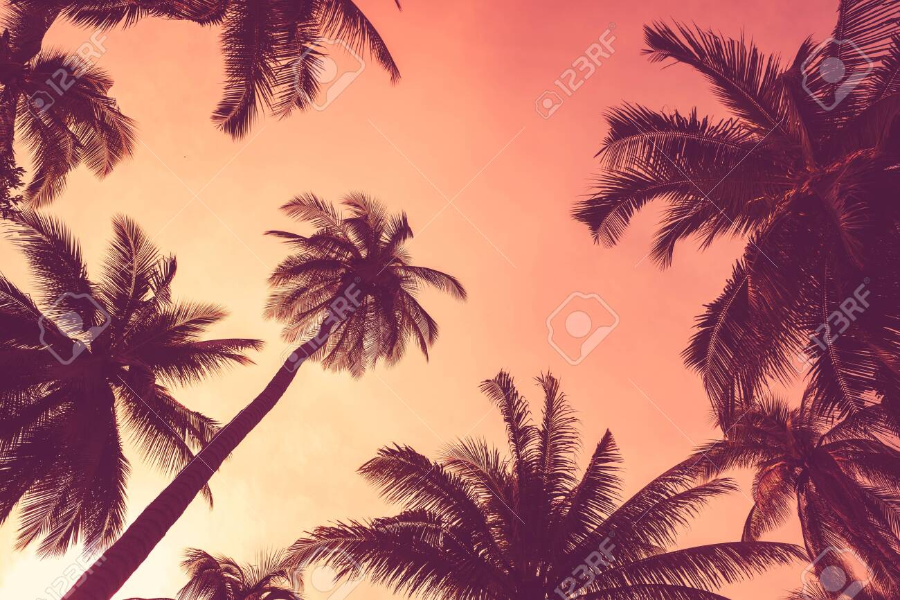 Summer vacation and nature travel adventure concept. Tropical palm tree with colorful bokeh sun light on sunset sky cloud abstract background. Vintage tone filter effect color style. - 122402246