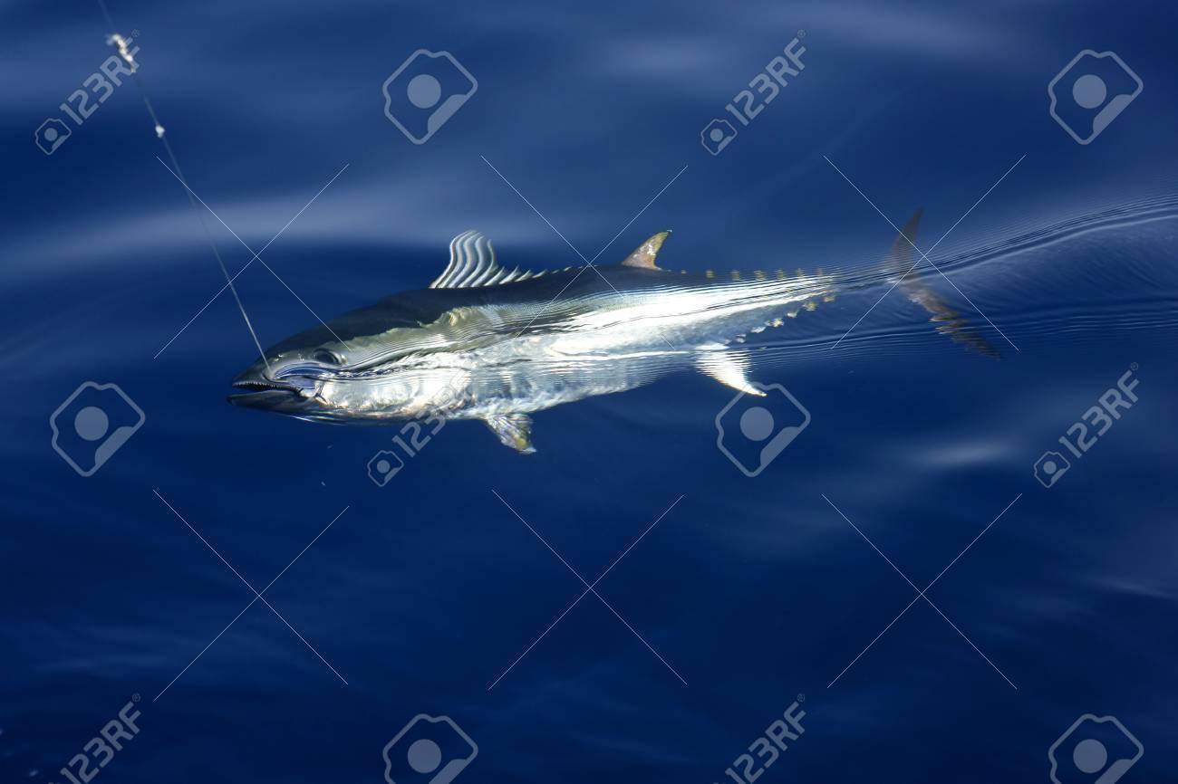 Blue fin tuna Mediterranean big game fishing and release Stock Photo - 5140291