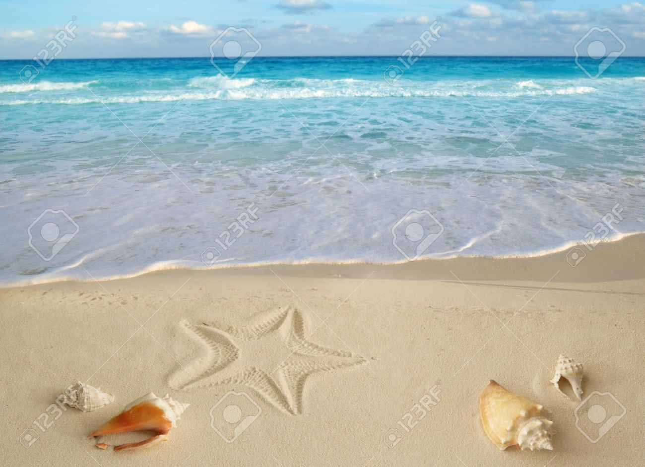 Sea Shells Starfish On Tropical Sand Turquoise Caribbean Summer