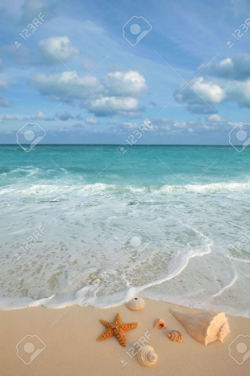 sea shells starfish on tropical sand turquoise caribbean summer vacation travel icon Stock Photo - 6703364