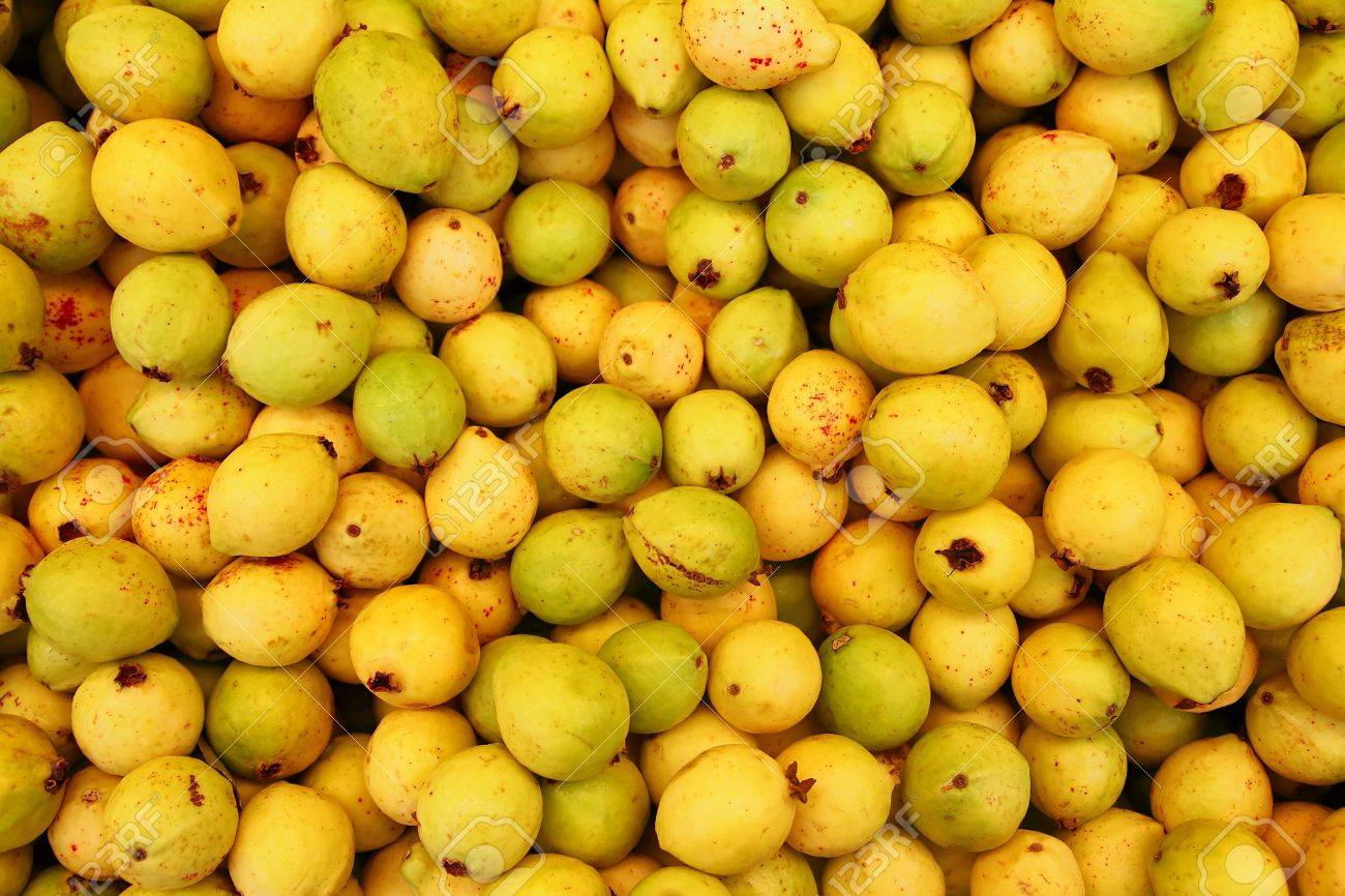 Stock Photo Delicious Mature Yellow Guava Fruit From Mexico Delicious  Mature Yellow Guava Fruit From Mexico