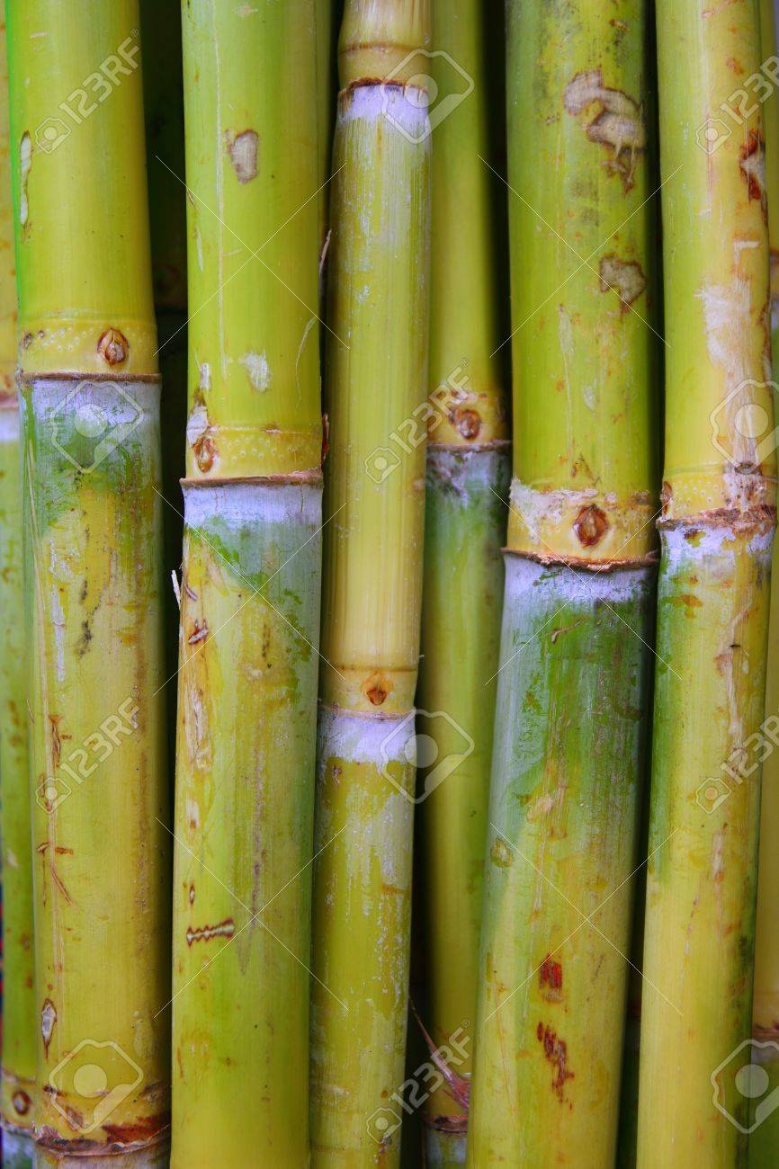 a3f23a597f92 bamboo cane food sugar green trunks in row Stock Photo - 8927083