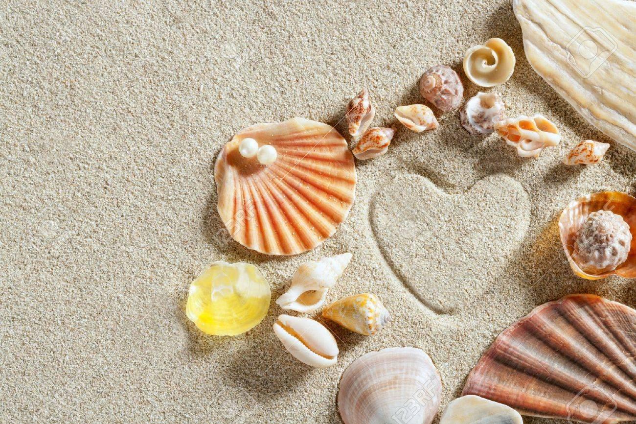 White Sand And Seashell | Usosweb.net