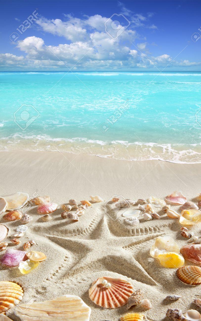 White Seashells On White Sand Stock Photo 57068704 - Shutterstock