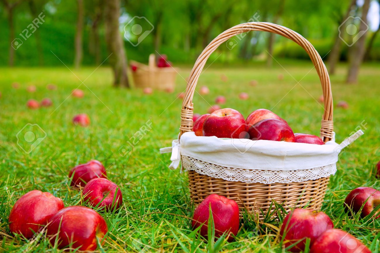 apples in basket on a grass trees field in red color Stock Photo - 10839580