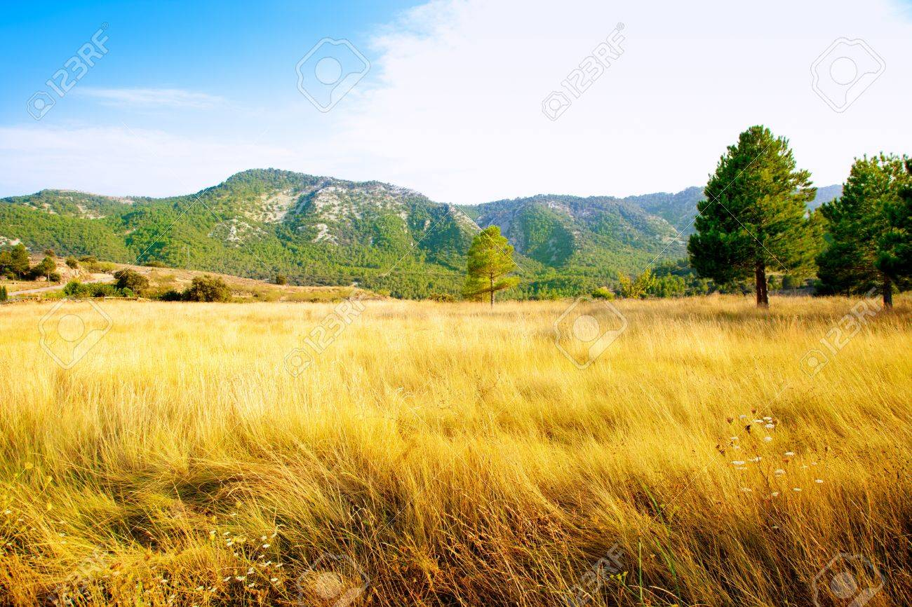 grass field background. Golden Grass Field With Mountains And Pine Trees In Background Stock Photo - 10839667 I