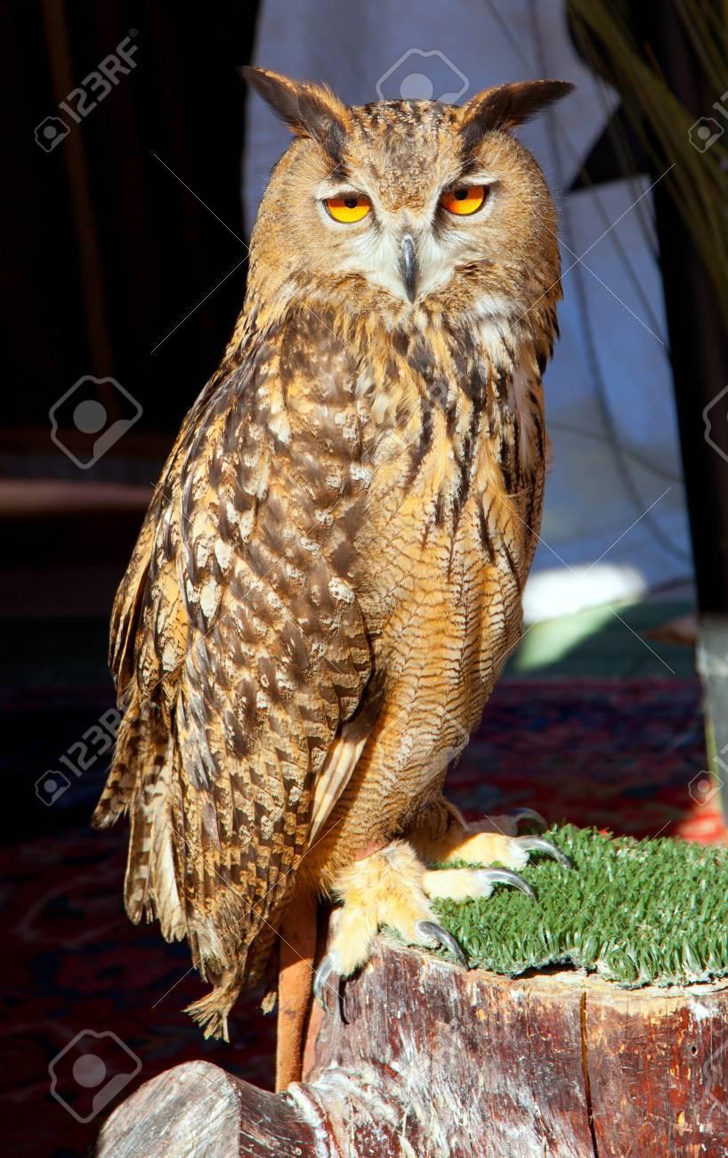Bubo bubo eagle owl night bird on trunk grass Stock Photo - 13601257