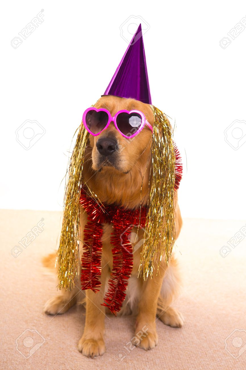 Dog Party Dressed Purple Hat And Heart Shape Sunglasses Golden