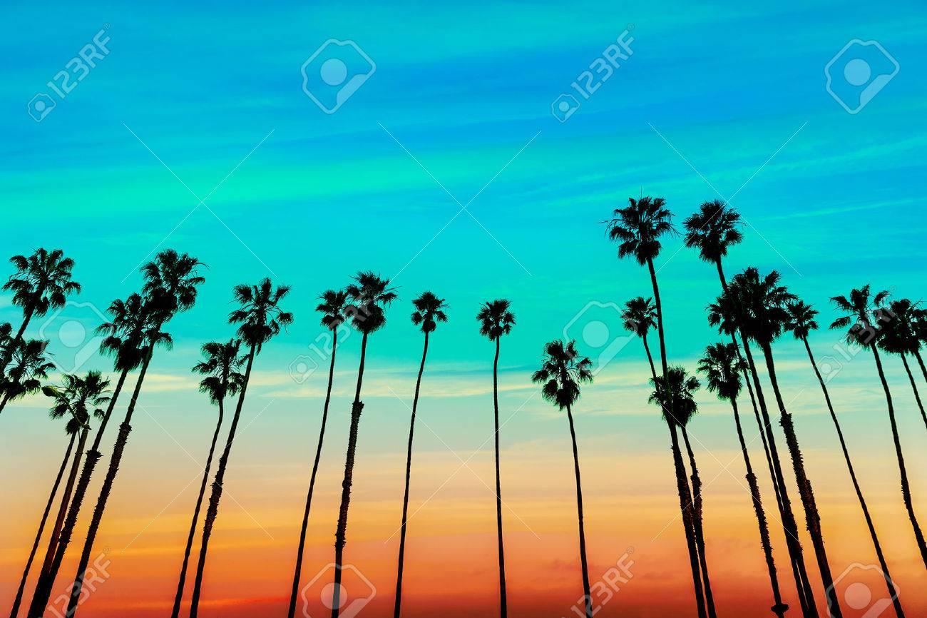 California sunset Palm tree rows in Santa Barbara US - 25649712