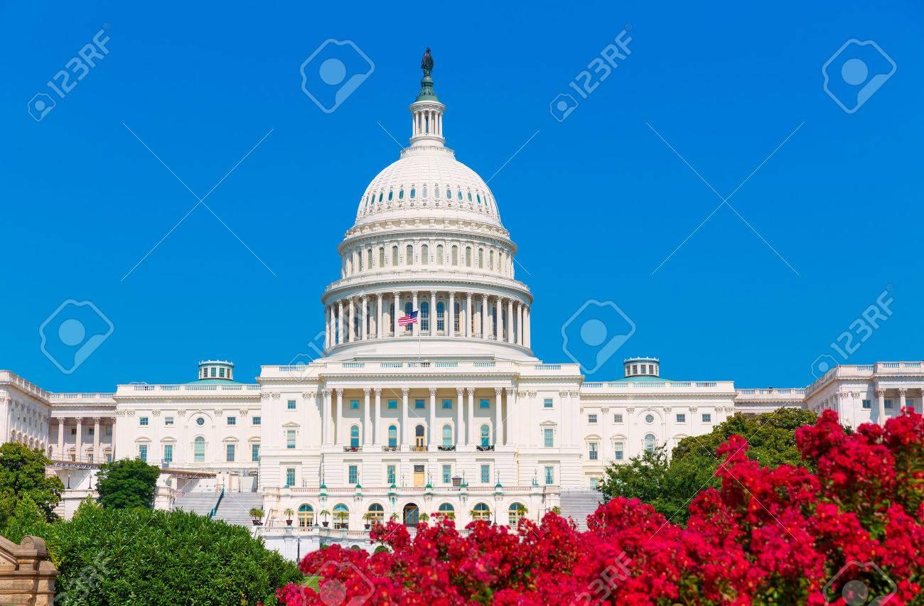 Capitol building Washington DC pink flowers garden USA congress US - 36930609