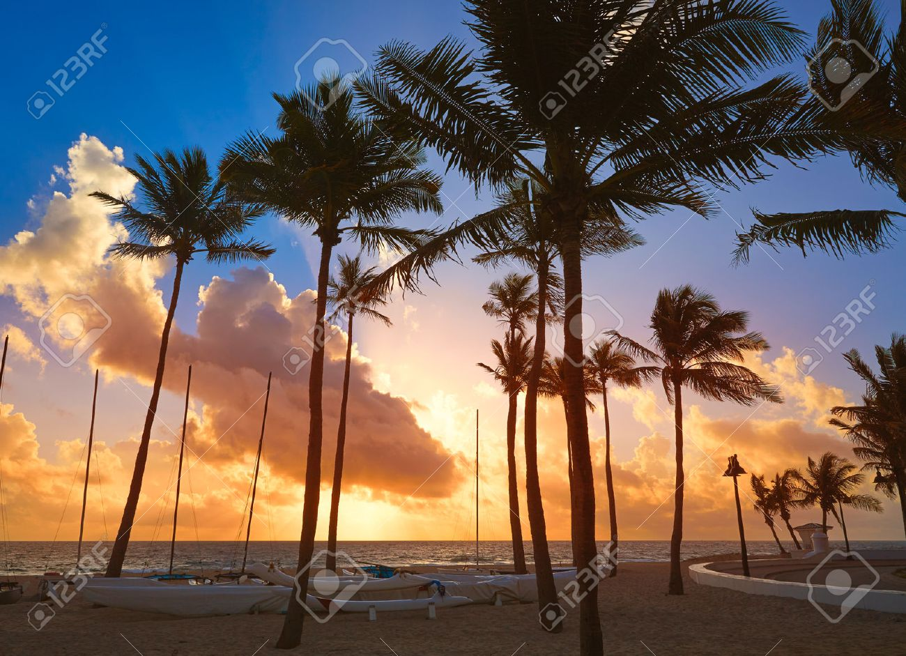 Fort Lauderdale beach morning sunrise in Florida USA palm trees - 58893235