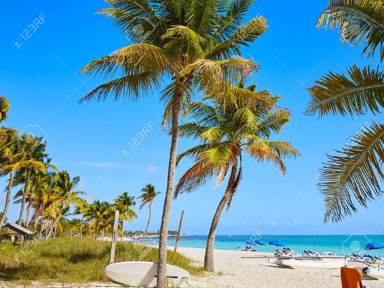 Key west florida Smathers beach palm trees in USA - 60127713