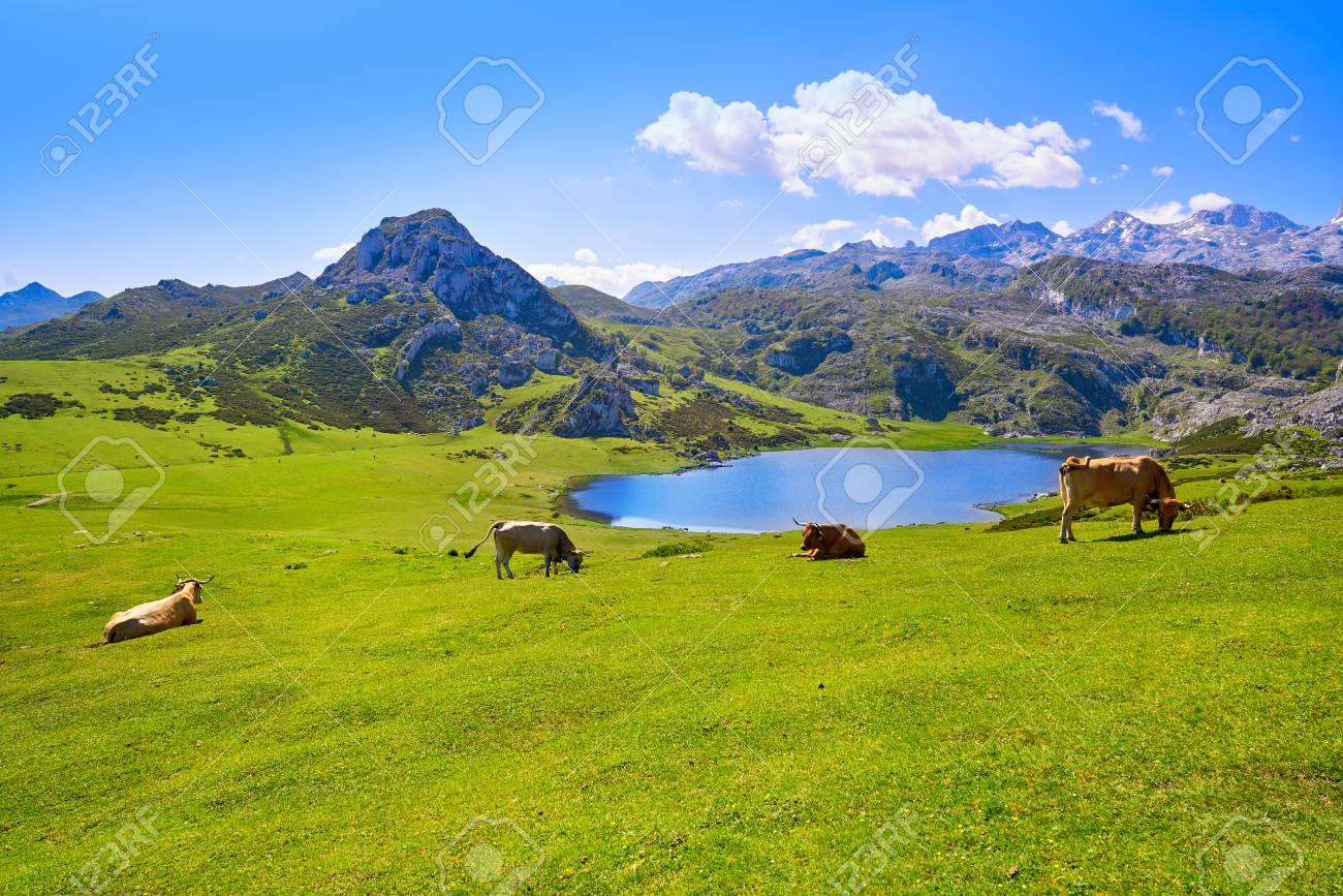 Ercina lake at Picos de Europa in Asturias of Spain - 109675885