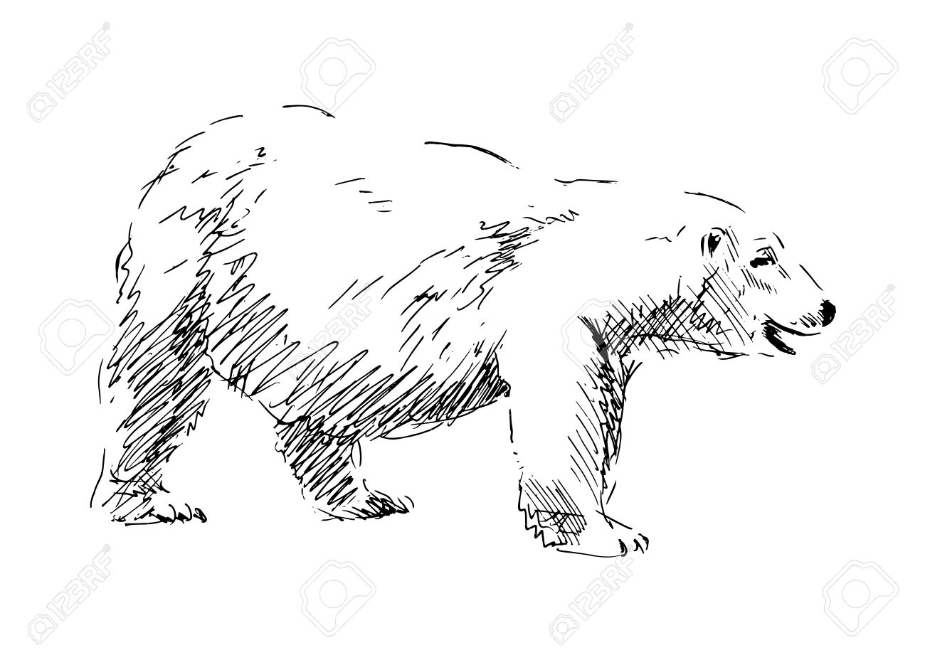 Hand Drawing A Polar Bear Vector Illustration