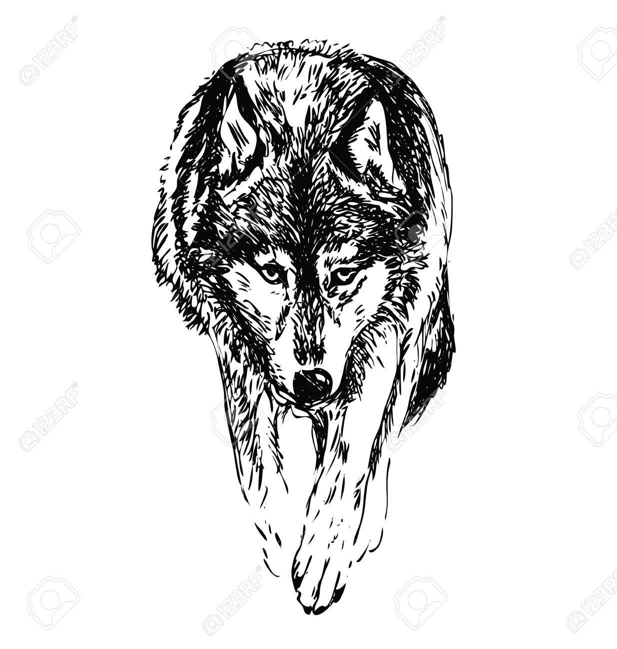hand sketch walking wolf - 48338664