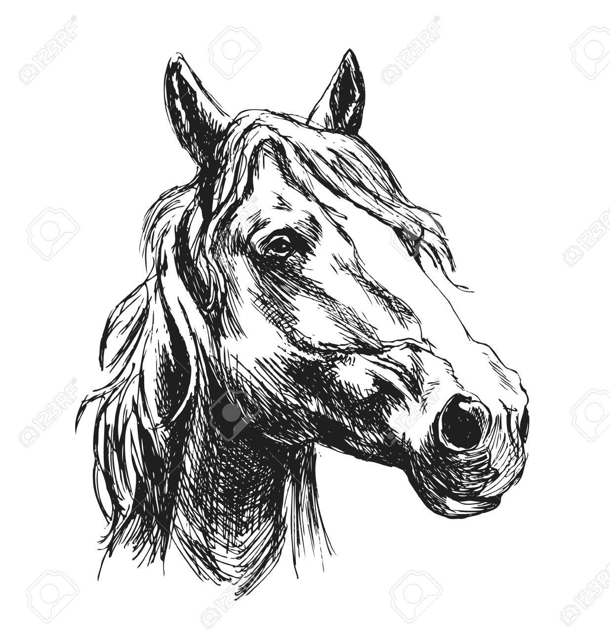 Hand Sketch Horse Head Vector Illustration Royalty Free Cliparts Vectors And Stock Illustration Image 69424995