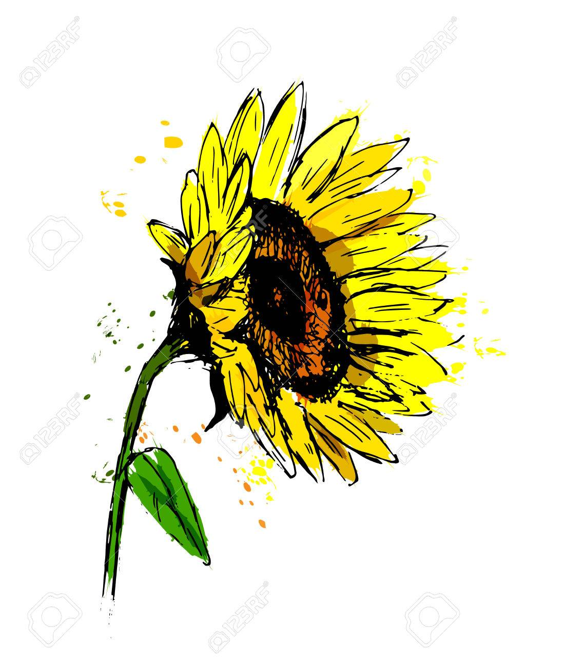 colored hand sketch sunflower vector illustration royalty free rh 123rf com sunflower vector black and white sunflower vector free