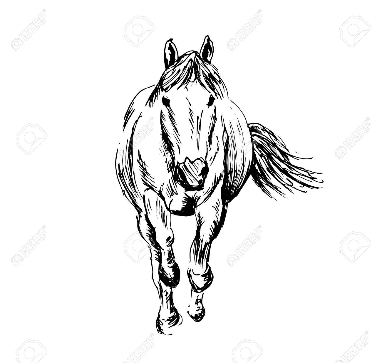Hand Sketch Of A Running Horse Vector Illustration Royalty Free Cliparts Vectors And Stock Illustration Image 87111130