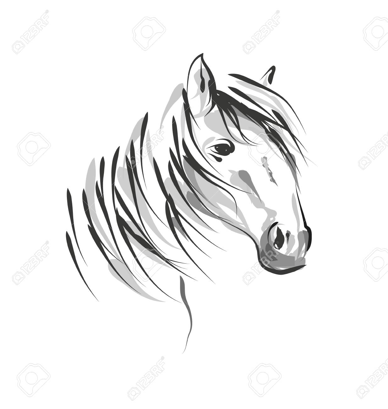 Vector Line Sketch Horse Head Royalty Free Cliparts Vectors And Stock Illustration Image 88075569
