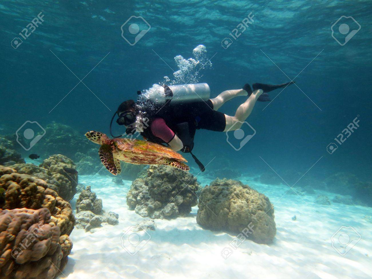 Young Man Scuba Diver between Water Surface near a turtle - 19204176