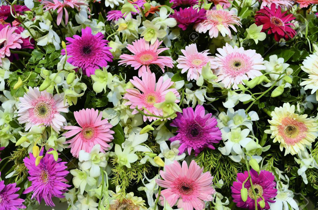Close Up Of Daisies And Orchids Flower Arrangement Stock Photo